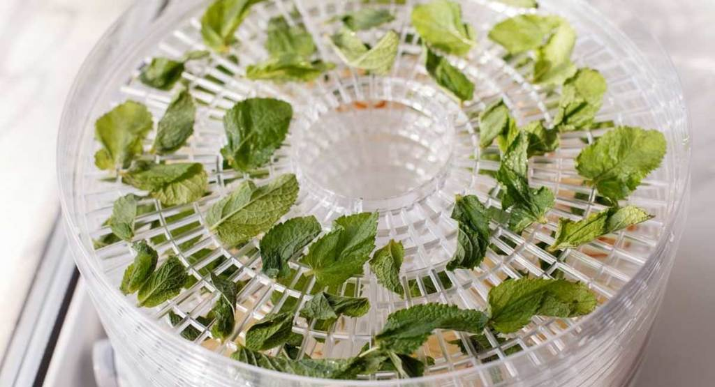 Five Best Dehydrator for Herbs